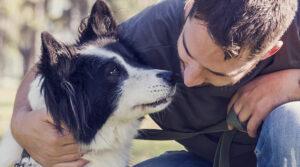 Infection du chien par la maladie du ver du cœur (Dilofilariose canine)