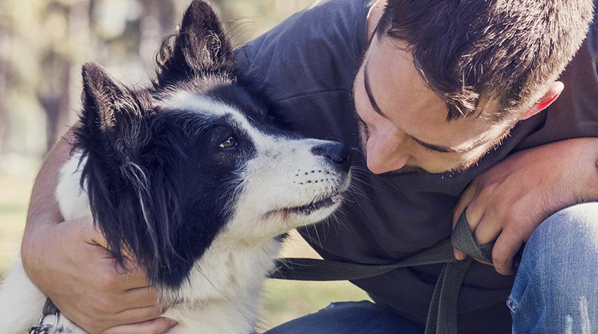 Canine Heartworm Infection (Dilofilaria immitis)
