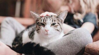 Les alternatives au dégriffage chez le chat
