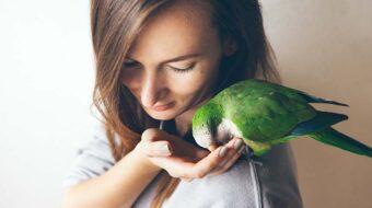 Soins des oiseaux exotiques
